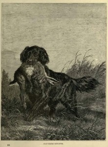 Flat-Coated Retriever (1881)